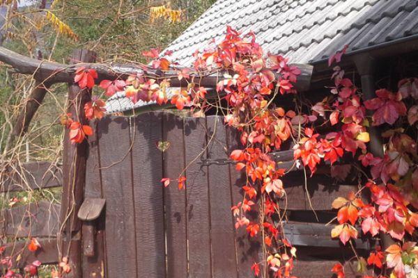 kraljev_hrib_paintball_hostel_rooms_camping_slovenia_0014F066FBFD-5ECD-28C9-1058-F5ADE3A58A61.jpg